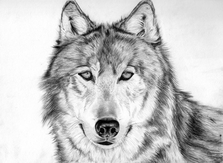 Fashion style Drawings awesome of wolves photo for girls