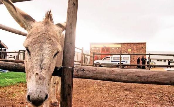 Horrific donkey killing site | Loads Life