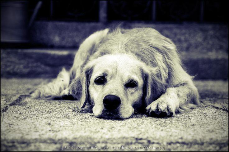 [2014 - Monção - Portugal] #fotografia #fotografias #photography #foto #fotos #photo #photos #local #locais #locals #animal #animais #animales #animals #cao #perro #dog #europa #europe