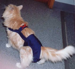 Joybies Navy Cat Piddle Pants™ for $31.95 #onselz