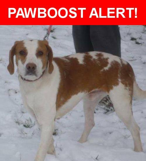 Please spread the word! Clancy was last seen in Midlothian, VA 23112.    Nearest Address: Brandermill near Clover Hill High School