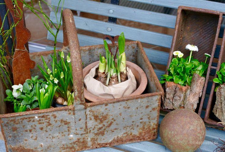 Diese schrulligekleine Gießkanne vom Flohmarkt, die rostige Metallkiste mit Henkel vom Altmetallhändler und meine Kastenbackformen, sind Teil meiner ersten Frühlingsdeko auf der Bank vor unserem Küchenfenster. Die Töpfchen mit Frühlingsblühern hatten mich auf dem Wochenmarkt am Freitag angelacht. Vorübergehendstelle ichdie Pflanzen in diesen Gegenständen ab, verberge diePflanztöpfe mit Baumrinde und …