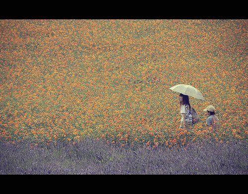 Fields in Furano, Hokkaido (Japan) [EXPLORE] | This photo wa… | Flickr
