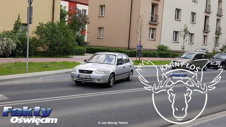 Łoś na środku drogi – FILM, FOTO #Oświęcim #KarnyŁoś #FaktyOświęcim #łoś #parkowanie #policja #drogówka