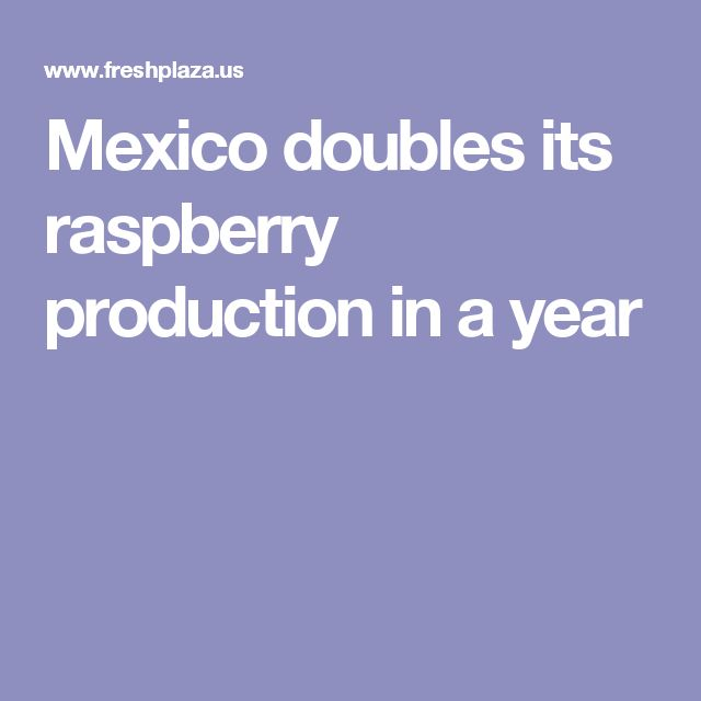 Mexico doubles its raspberry production in a year