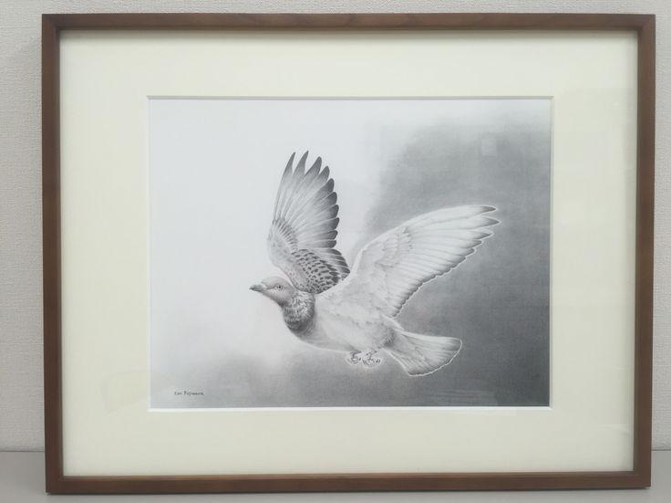 Rock dove : pencil 空を舞う(ドバト):鉛筆、イラストボード