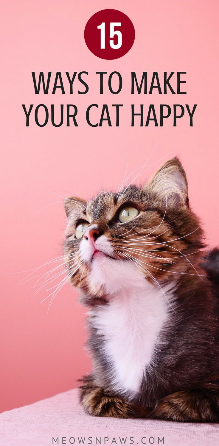 How To Make Your Cat Happy 15 Things You Can Do Right Now Meows N Paws Cat Care Cat Care Tips Cat Training
