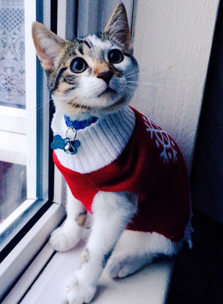 Elvis can't wait for Christmas!