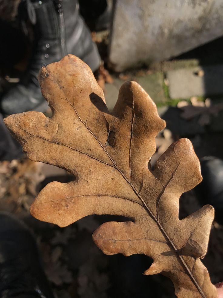 #leaves #naturephotography #fall #autumn