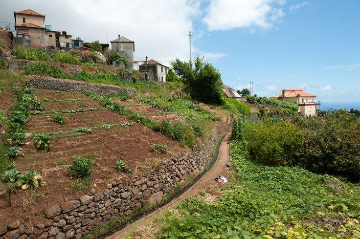 Gardens and levada along the road to Estrela da Calheta.