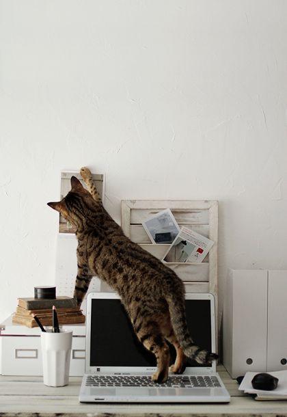 Cat trouble