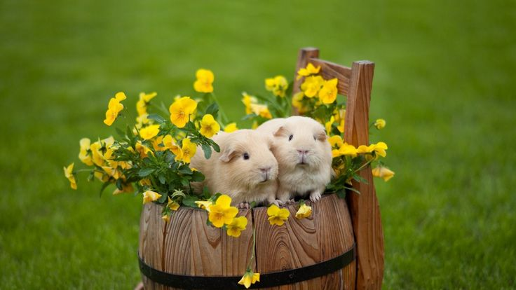 Funny Hamster wallpaper  Android Apps on Google Play 1024×768 Cute Hamster Wallpapers (44 Wallpapers) | Adorable Wallpapers
