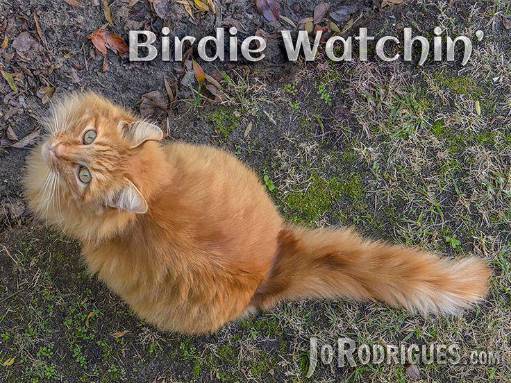 Bird Watchin' Seen any yet?