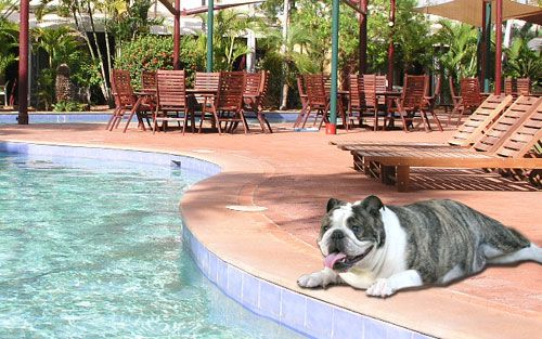 Bundanoon Lodge-one of the finest B&Bs in Southern Highlands offers Pet Friendly Accommodation Southern Highlands so that you can immerse yourself in the beauty of nature, with your faithful friend by your side.