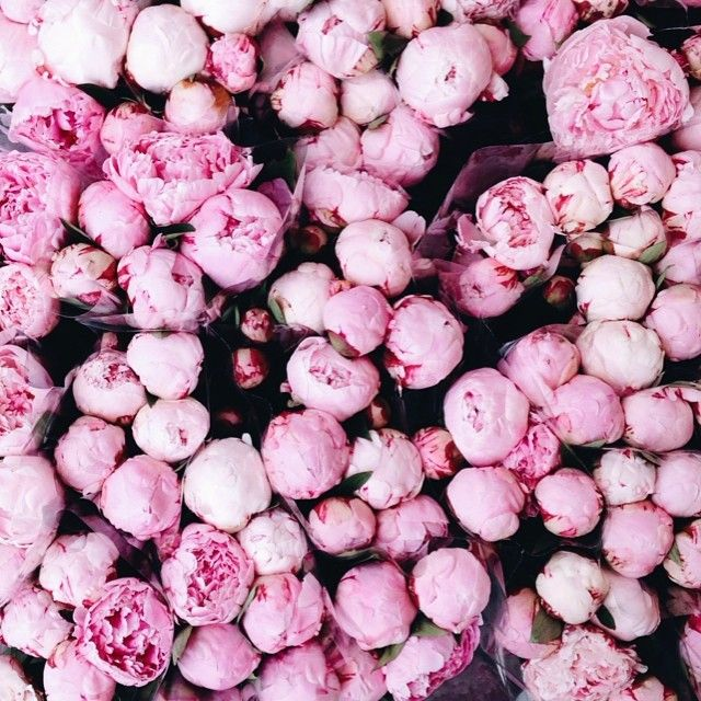 17 Best Images About Floral On Pinterest Pink Peonies