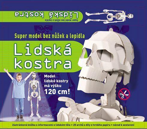 Lidská kostra - super model bez nůžek a lepidla
