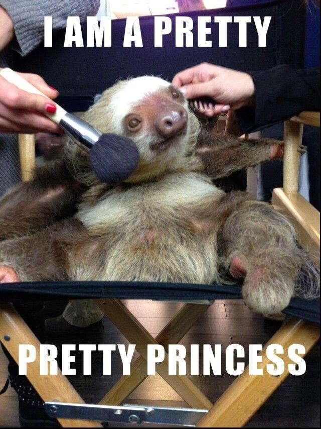 Pretty sloth                                                                                                                                                      More