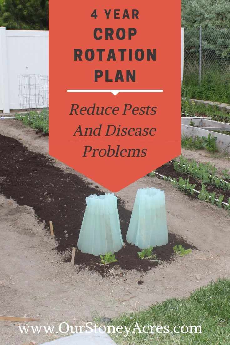 Learn How To Rotate The Crops In Your Backyard Garden Using This 4 Year Plan Crop Rotation In An Crop Rotation Fall Garden Vegetables Organic Gardening Tips Backyard garden crop rotation