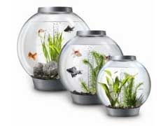Acrylic Aquariums For Sale Review - http://www.mypetarticles.com/acrylic-aquariums-for-sale-review/#more-9