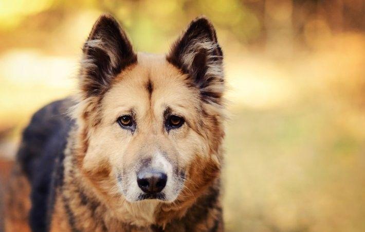 Sevimli Köpekler,Köpek Resimleri - Sayfa 3 - Megaforum.COM - Forumun Bir Adım Ötesi