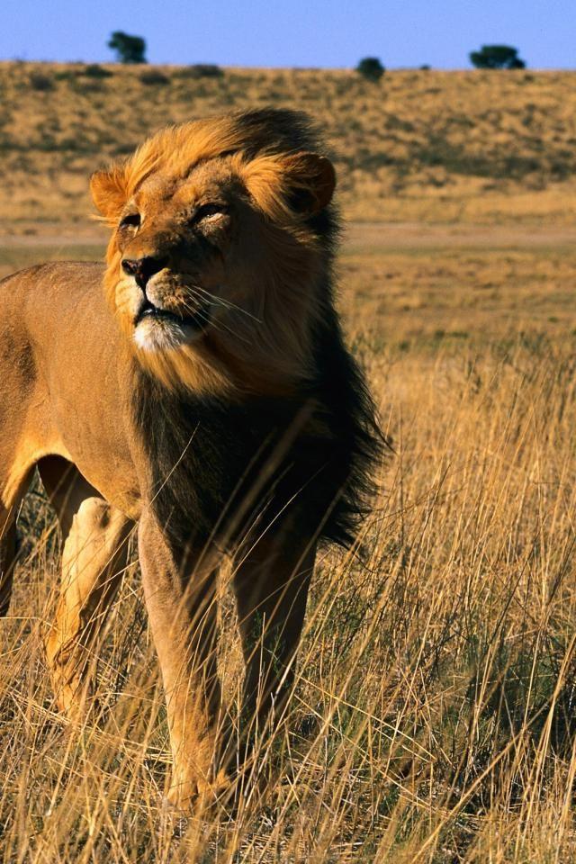 Iphone Jungle Animal Animal
