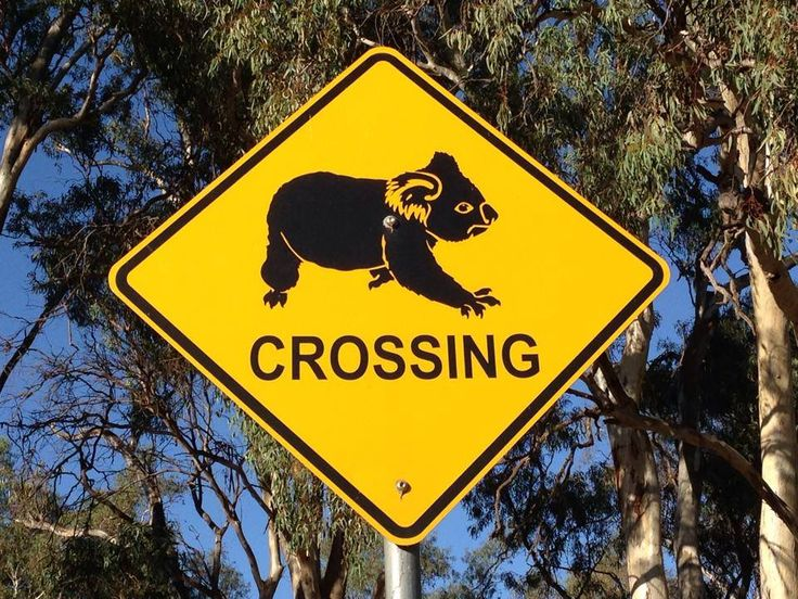 #Koala Crossing #Sign by the side of the #road in #southern #NSW #Australia #aus_wildlife