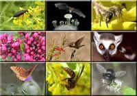 animal pollinators   Nine tiled images of various pollinators, a beetle, bat, bee, ants ...
