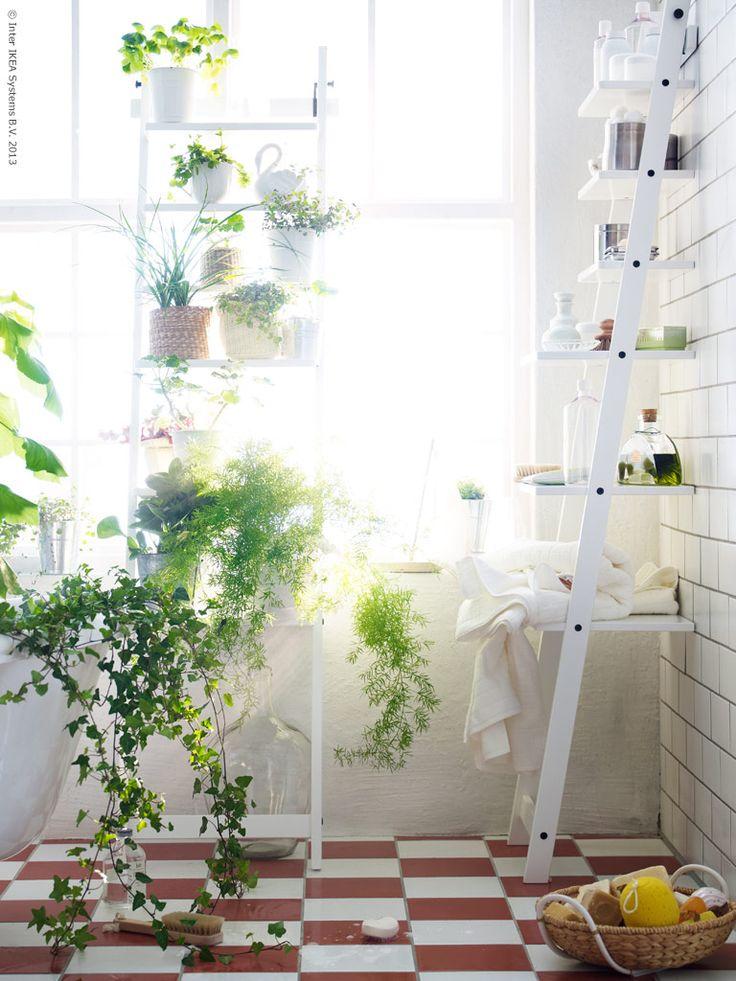 plant shelf in bathroom