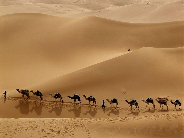 Desktop Wallpaper-s > Landscapes > Camel Caravan Crossing the Libyan Desert