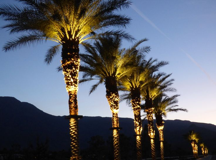 Outdoor Led Palm Tree Lighting Fixtures