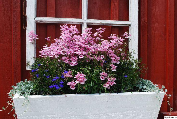 blomlåda i trä,gammalt fönster