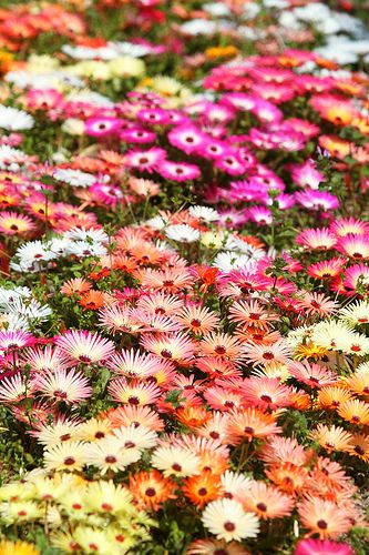 flowerfield, Shin-Asahi town in Takashima City, Shiga Prefecture, Japan