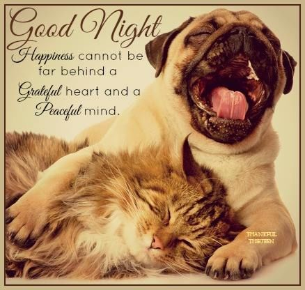 Good Night Pictures, Photos, and Images for Facebook, Tumblr, Pinterest, and Twitter