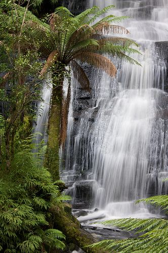 Triplet Falls, Otway National Park, Australia- Great ocean road