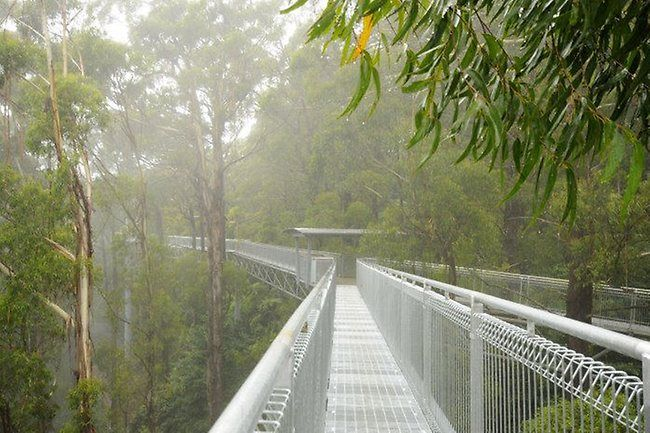 ILLAWARRA FLY TREETOP WALK, AUSTRALIA | Lonely Planet's most breathtaking platforms  the Illawarra Fly Treetop Walk puts you in the canopy of Australia's temperate and tree-cloaked Southern Highlands. Hovering 25m above the ground, between stands of eucalyptus, sassafras, blackwood and mulberry,
