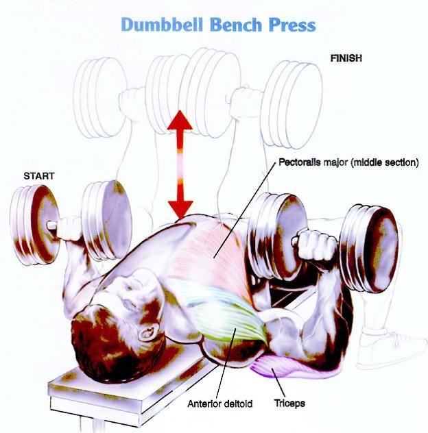 best 25 chest exercises for mass ideas on pinterest