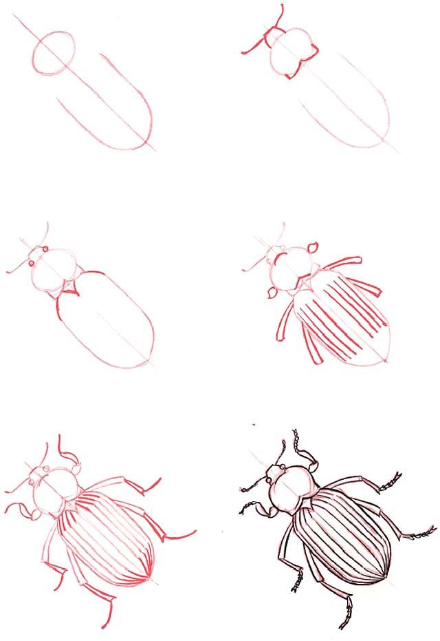 Learn to draw ... Beetle