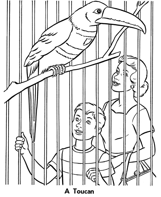 Zoo Animals Coloring Pages Games Buffalo coloring pages zoo