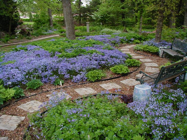 woodland phlox garden... replicate this in your woods above the cabin...