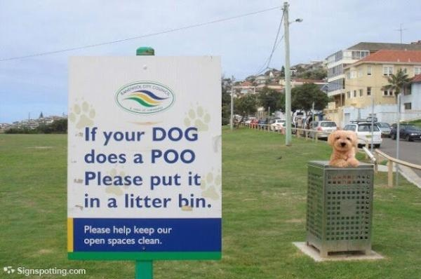 If your dog does a poo, please put it in  a litter bin. Good one #Randwick Council.
