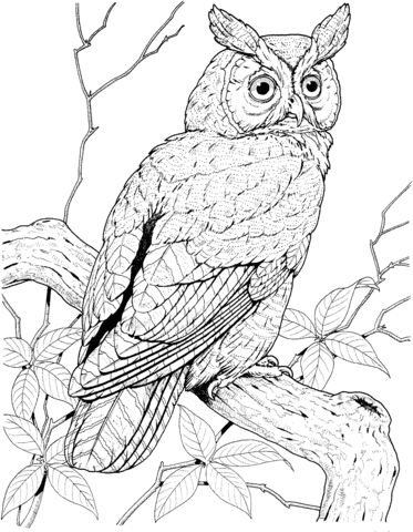 Perched Long Eared Owl Coloring Page