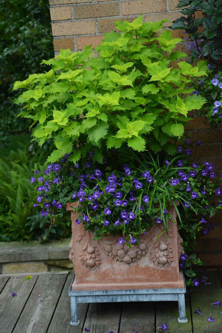 31 best love that lime images on pinterest container - What is lime used for in gardening ...