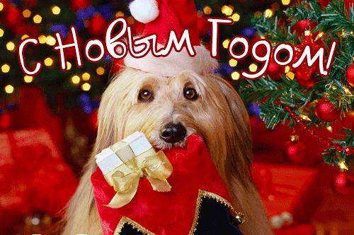 Стихи и поздравления с годом Собаки