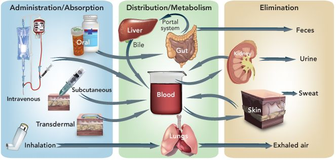 Pharmacokinetics - Administration, Absorption, Distribution, Metabolism, and Elimination of Drugs