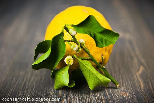 Amalfi Zitronen by Kochsamkeit, via Flickr