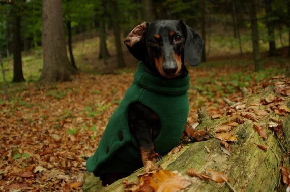 Winter coat for a STANDARD dachshund warm and by LupoandOlimp