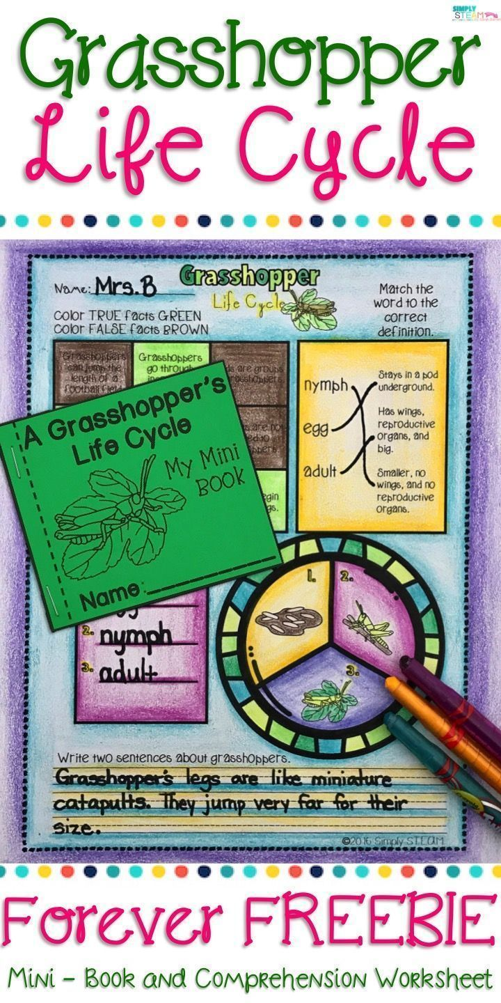 Life Cycle FREEBIE worksheet for 2nd and 3rd grade students. This printable  is a great activ…   Life cycles [ 1440 x 720 Pixel ]