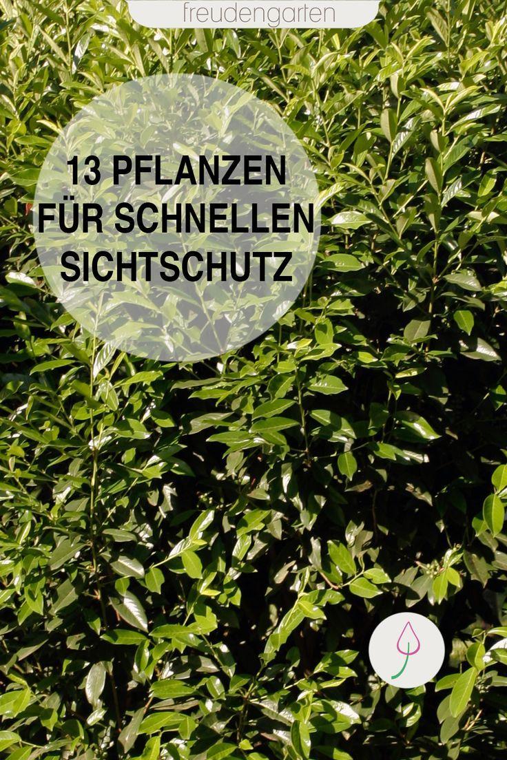 Diese Pflanzen bieten eine schnelle Privatsphäre für Garten und Terrasse.   – BÄUME UND STRÄUCHER FÜR DEN GARTEN