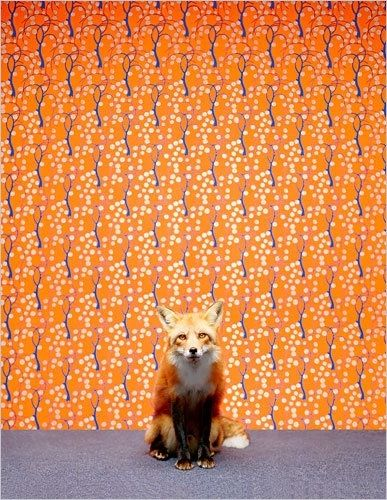 FoxCatherine Ledner, Art, Foxes Things, Portraits, Red Foxes, Foxes Wallpapers, Foxy Things, Orange Foxes, Animal