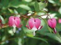 The 19 Best Shade-Loving Plants